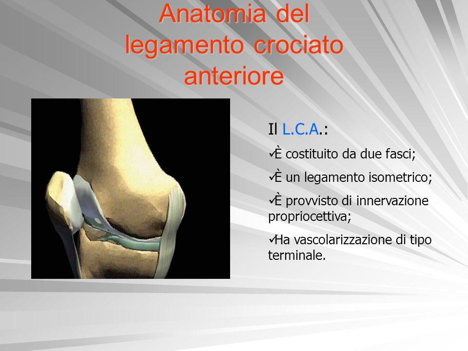 Anatomia del legamento crociato anteriore