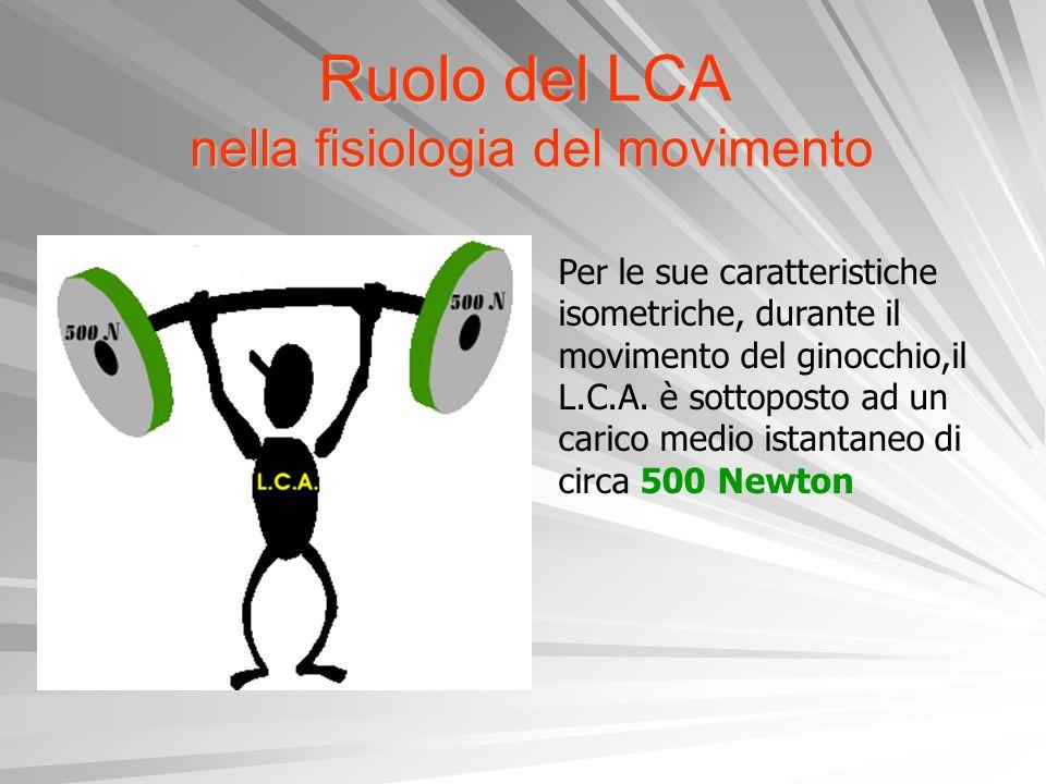 Ruolo del LCA nella fisiologia del movimento