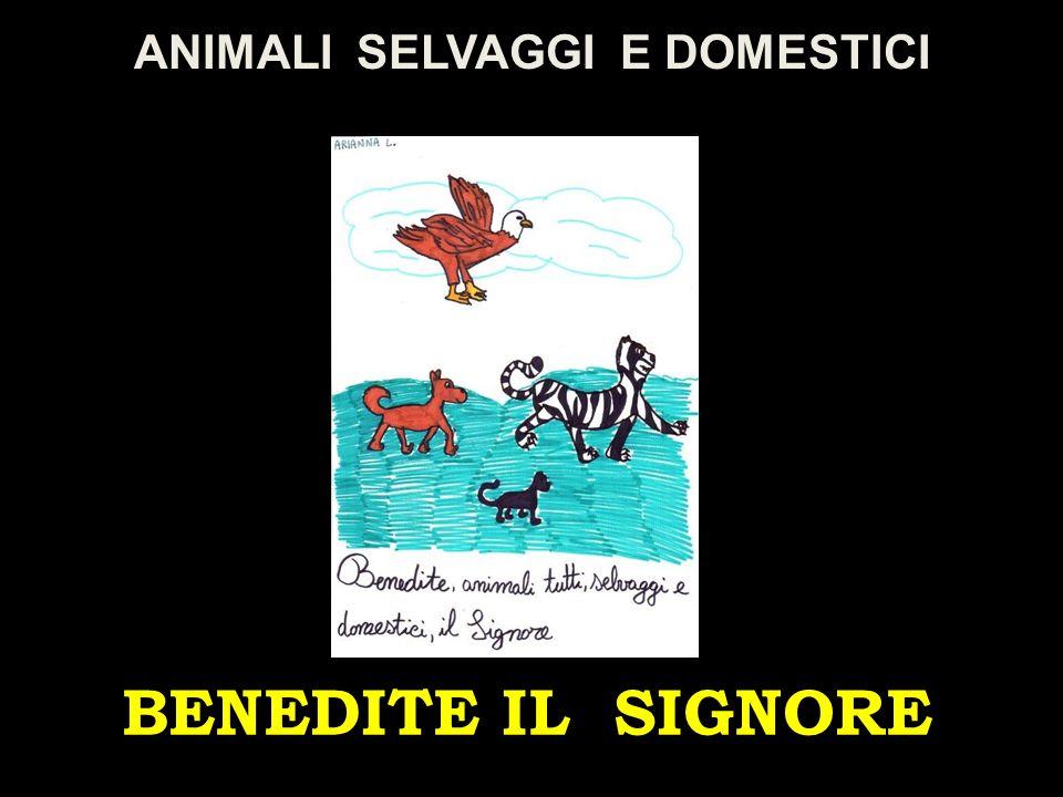 ANIMALI SELVAGGI E DOMESTICI