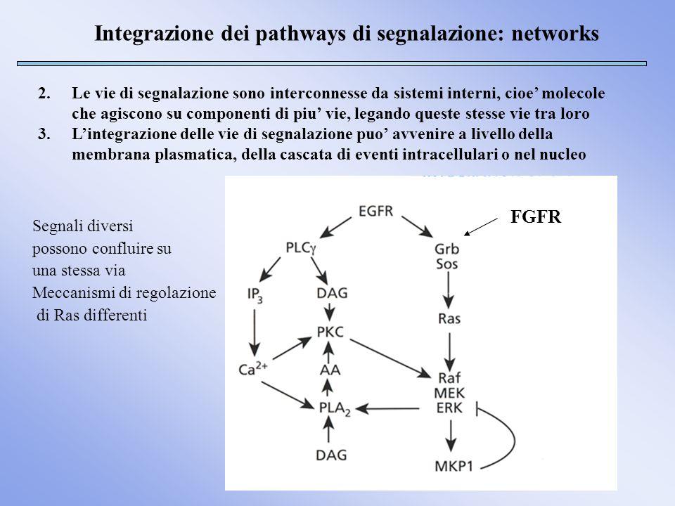 Integrazione dei pathways di segnalazione: networks