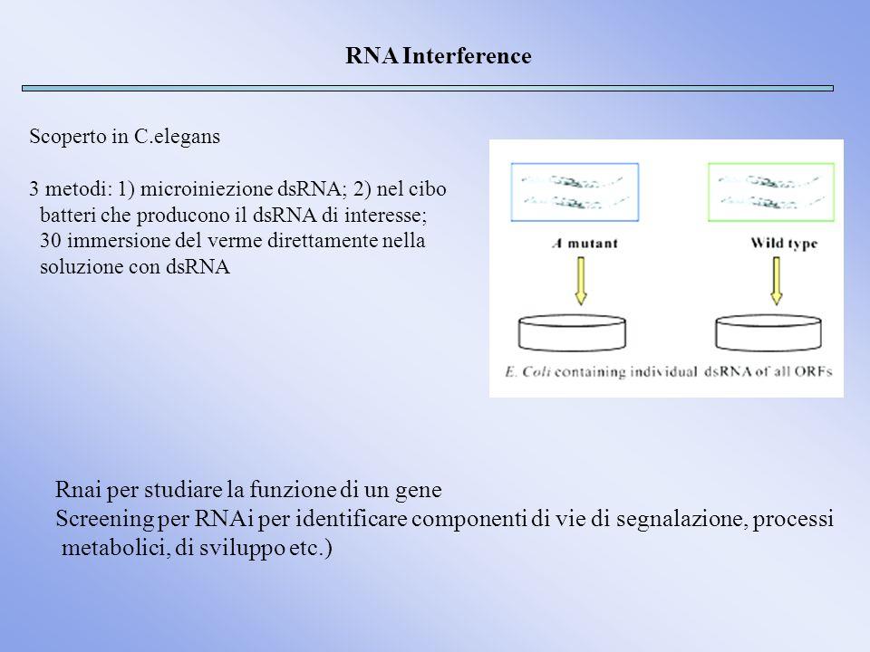 Rnai per studiare la funzione di un gene