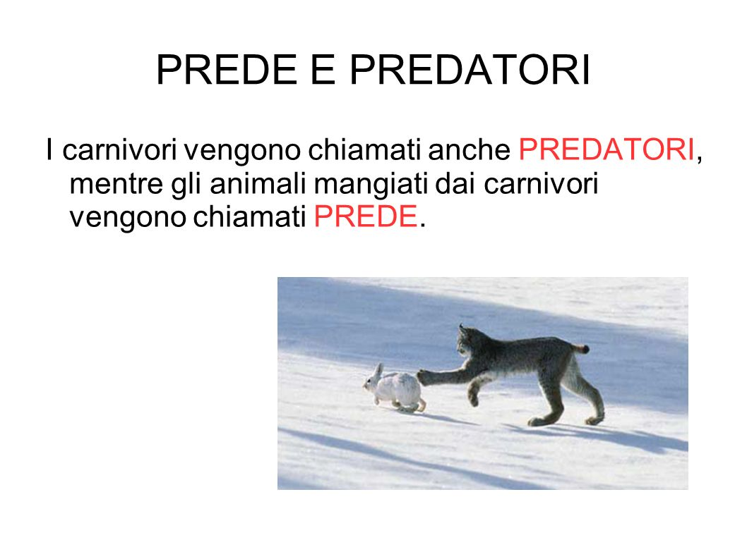 PREDE E PREDATORI I carnivori vengono chiamati anche PREDATORI, mentre gli animali mangiati dai carnivori vengono chiamati PREDE.