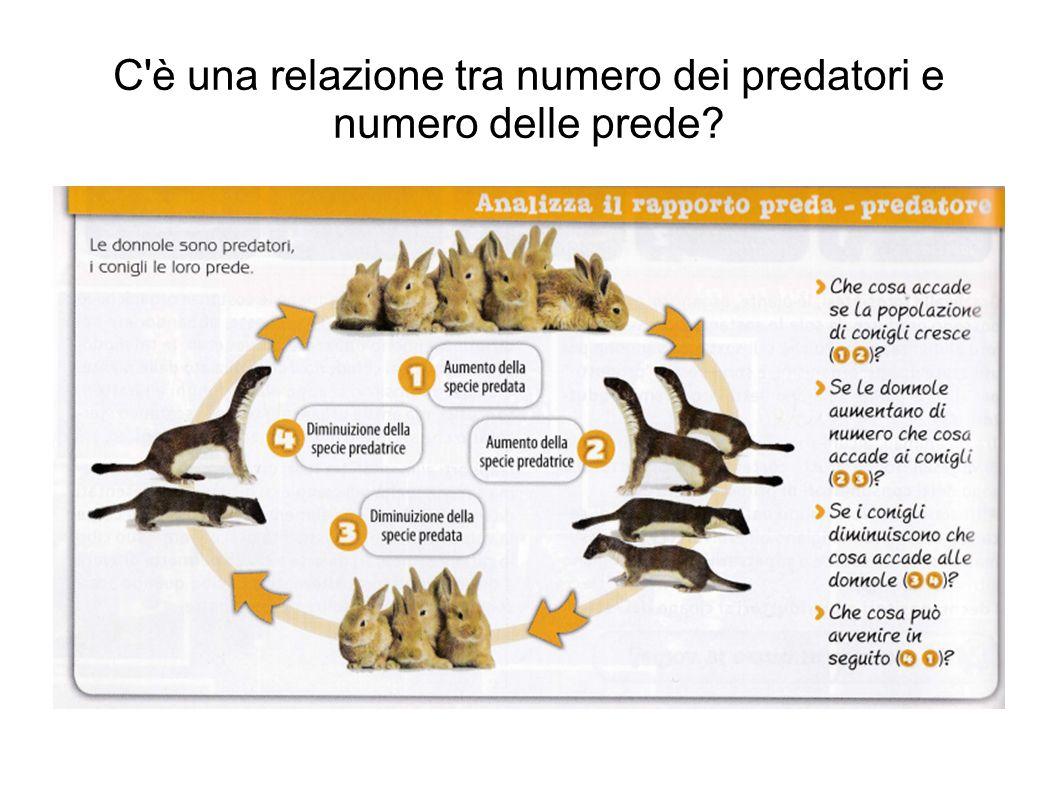 C è una relazione tra numero dei predatori e numero delle prede