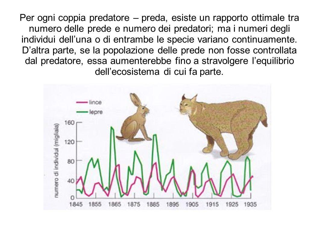 Per ogni coppia predatore – preda, esiste un rapporto ottimale tra numero delle prede e numero dei predatori; ma i numeri degli individui dell'una o di entrambe le specie variano continuamente.
