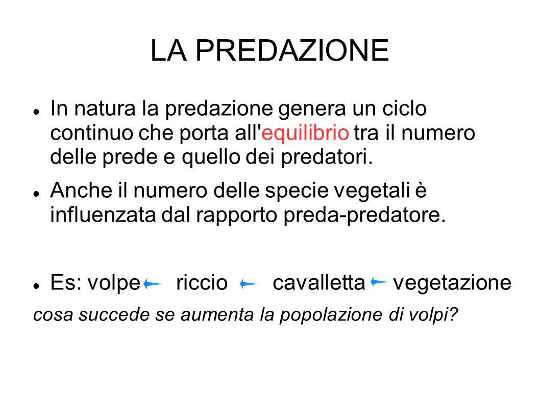 LA PREDAZIONE In natura la predazione genera un ciclo continuo che porta all equilibrio tra il numero delle prede e quello dei predatori.