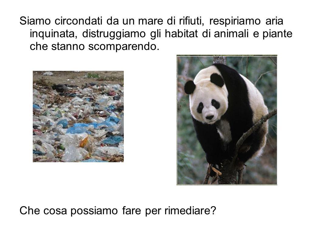 Siamo circondati da un mare di rifiuti, respiriamo aria inquinata, distruggiamo gli habitat di animali e piante che stanno scomparendo.