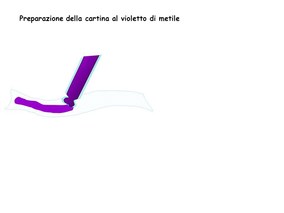 Preparazione della cartina al violetto di metile