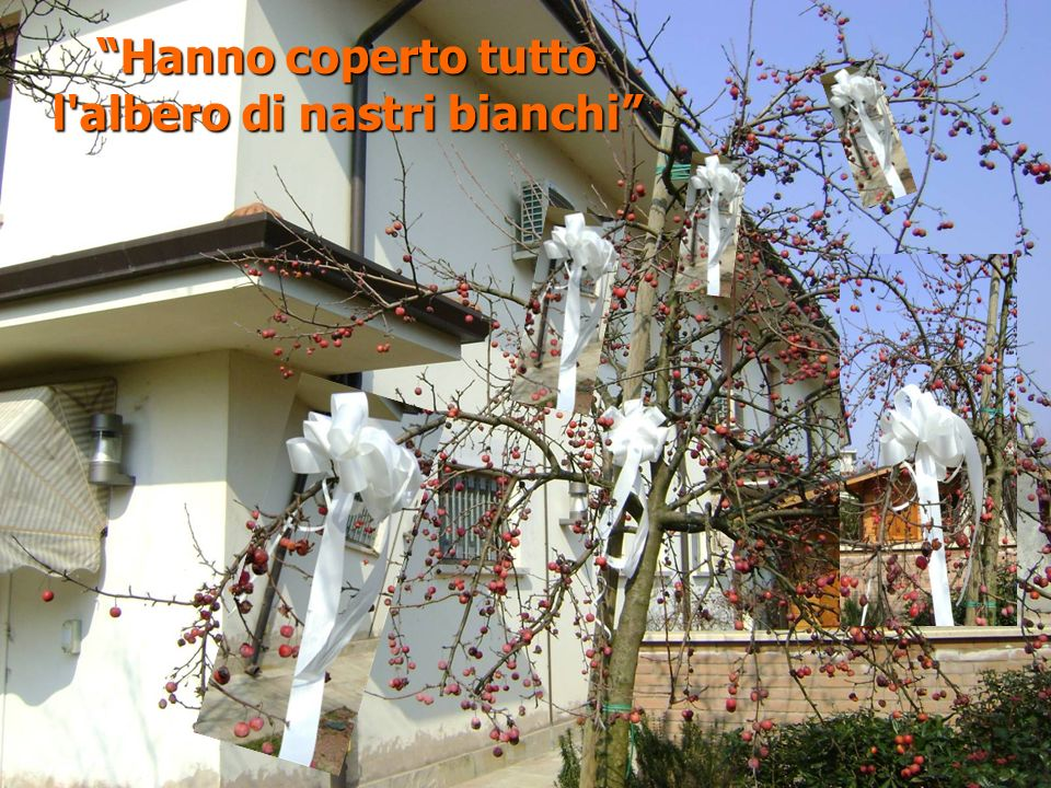 l albero di nastri bianchi