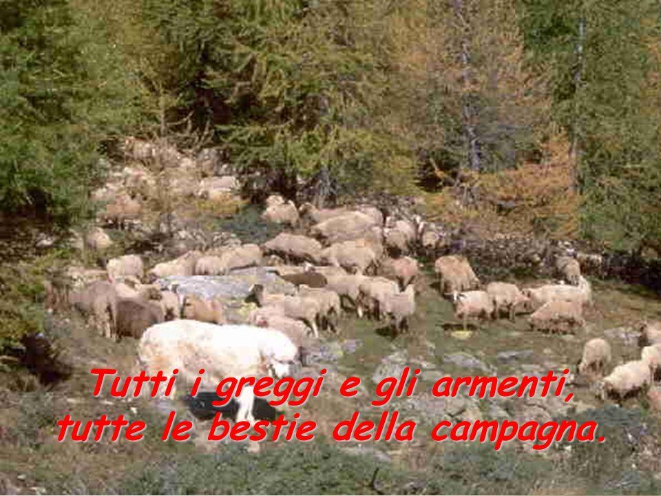 Tutti i greggi e gli armenti, tutte le bestie della campagna.