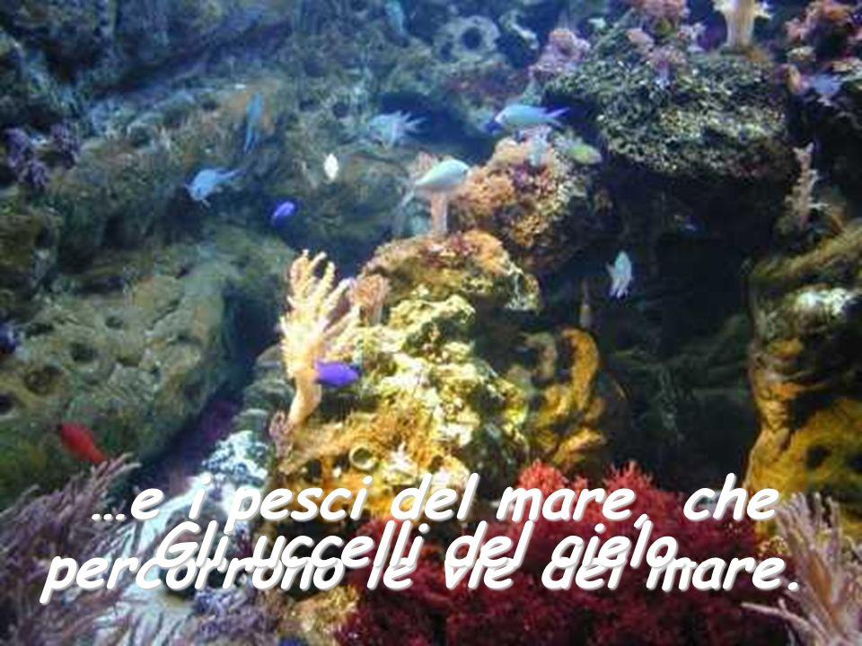 percorrono le vie del mare.
