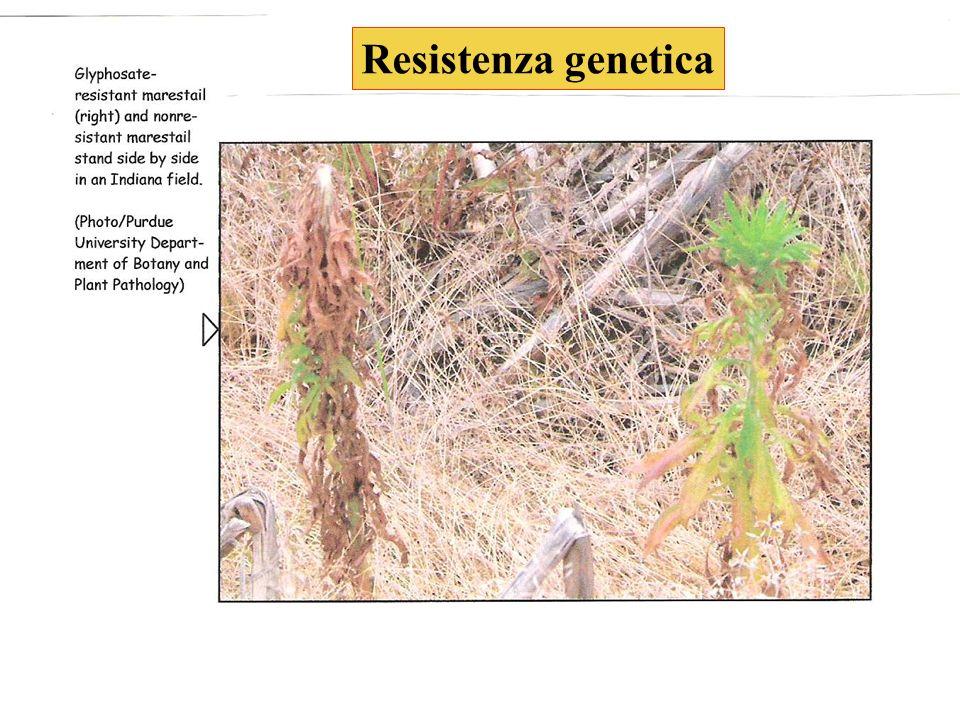 Resistenza genetica