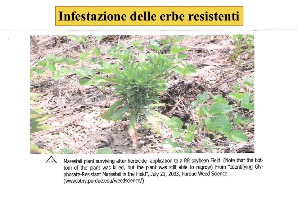 Infestazione delle erbe resistenti