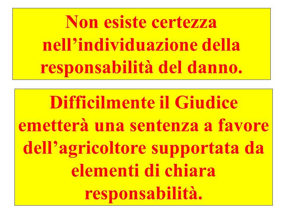 Non esiste certezza nell'individuazione della responsabilità del danno.