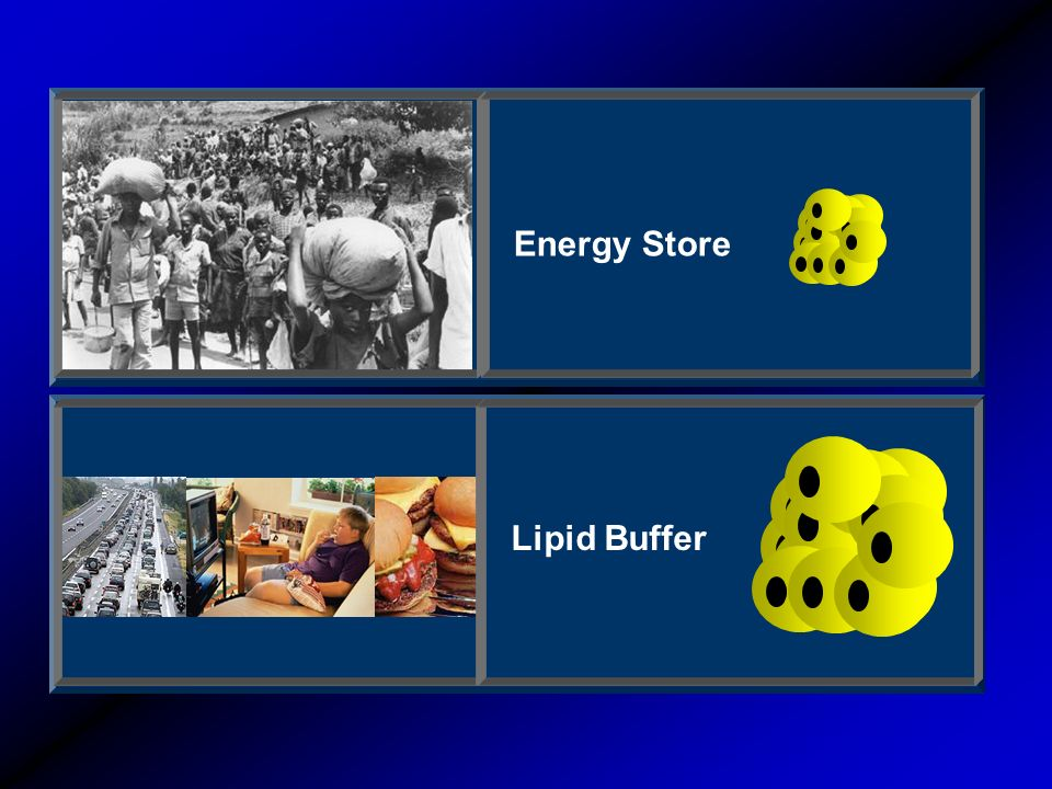 Energy Store Lipid Buffer
