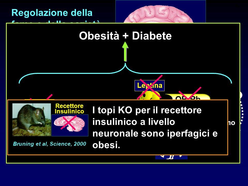 Obesità + Diabete Regolazione della fame e della sazietà