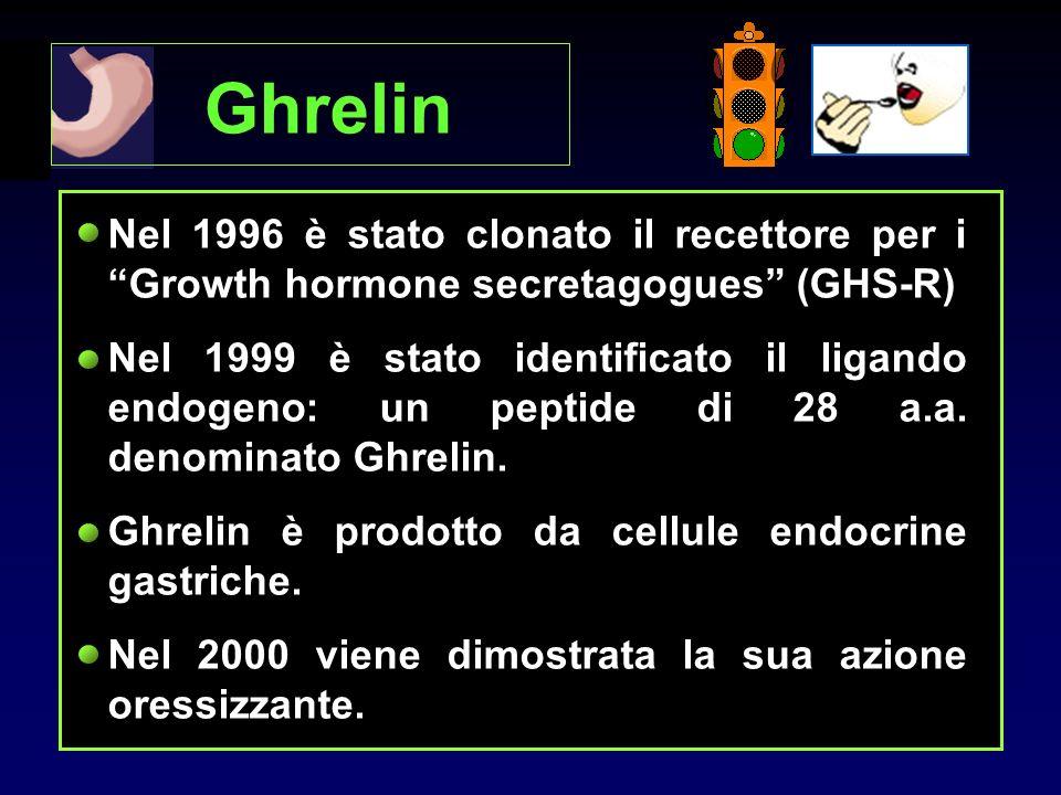 Ghrelin Nel 1996 è stato clonato il recettore per i Growth hormone secretagogues (GHS-R)