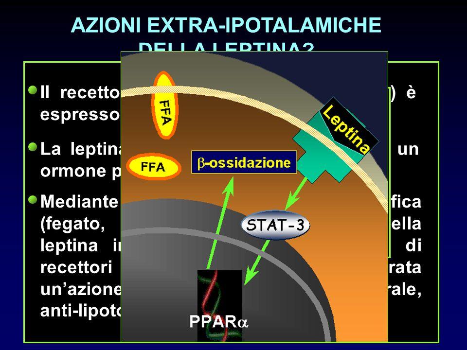 AZIONI EXTRA-IPOTALAMICHE DELLA LEPTINA