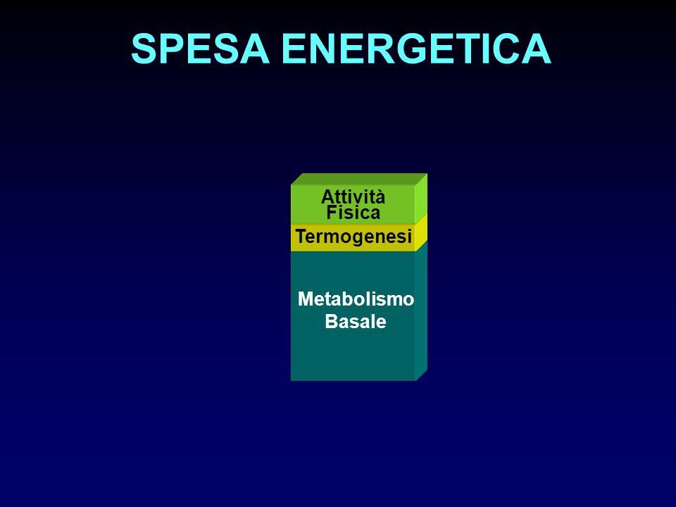 SPESA ENERGETICA Metabolismo Basale Termogenesi Attività Fisica