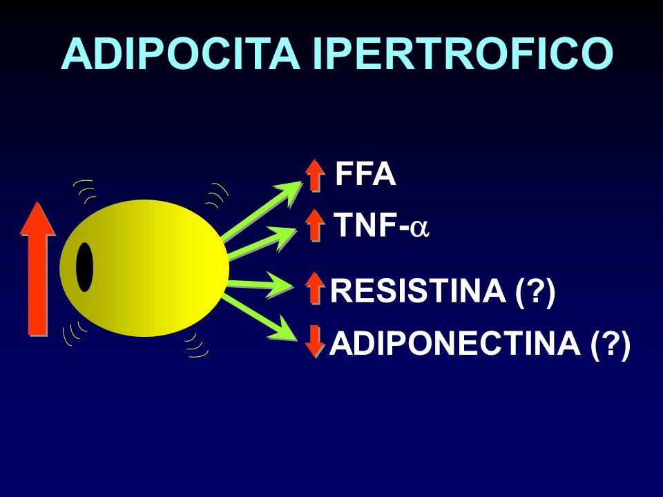 ADIPOCITA IPERTROFICO