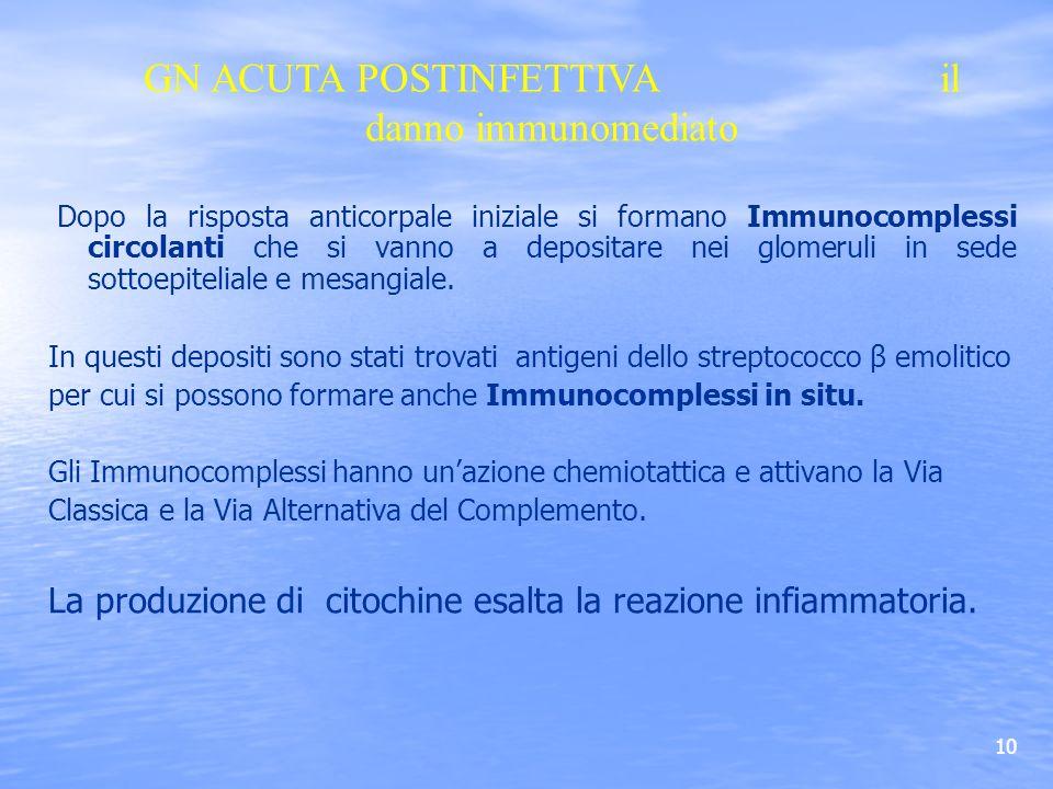 GN ACUTA POSTINFETTIVA il danno immunomediato