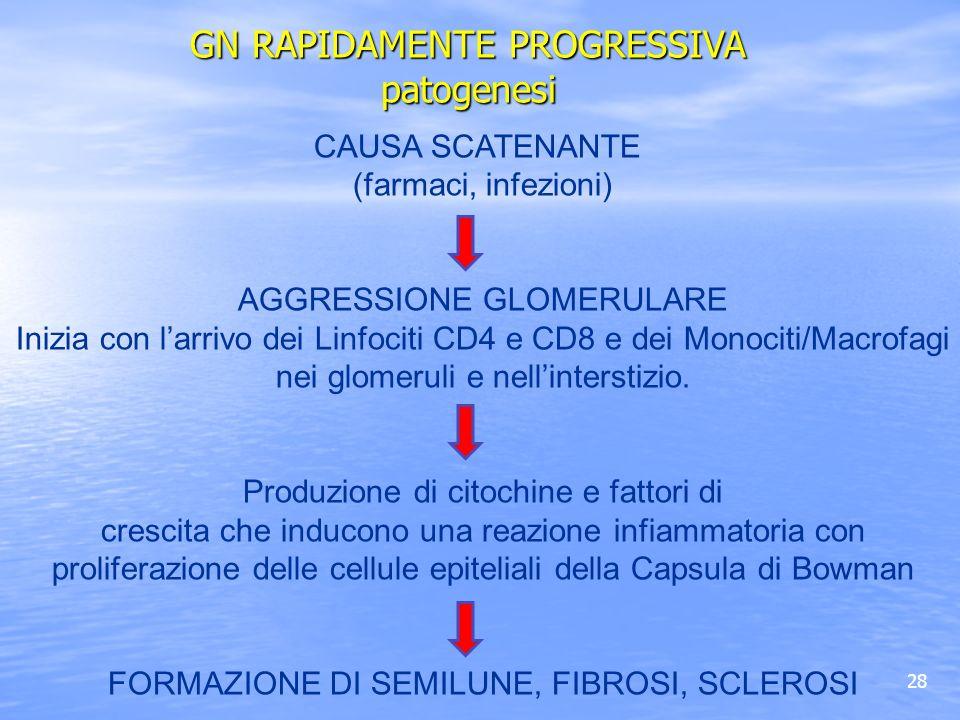 GN RAPIDAMENTE PROGRESSIVA patogenesi