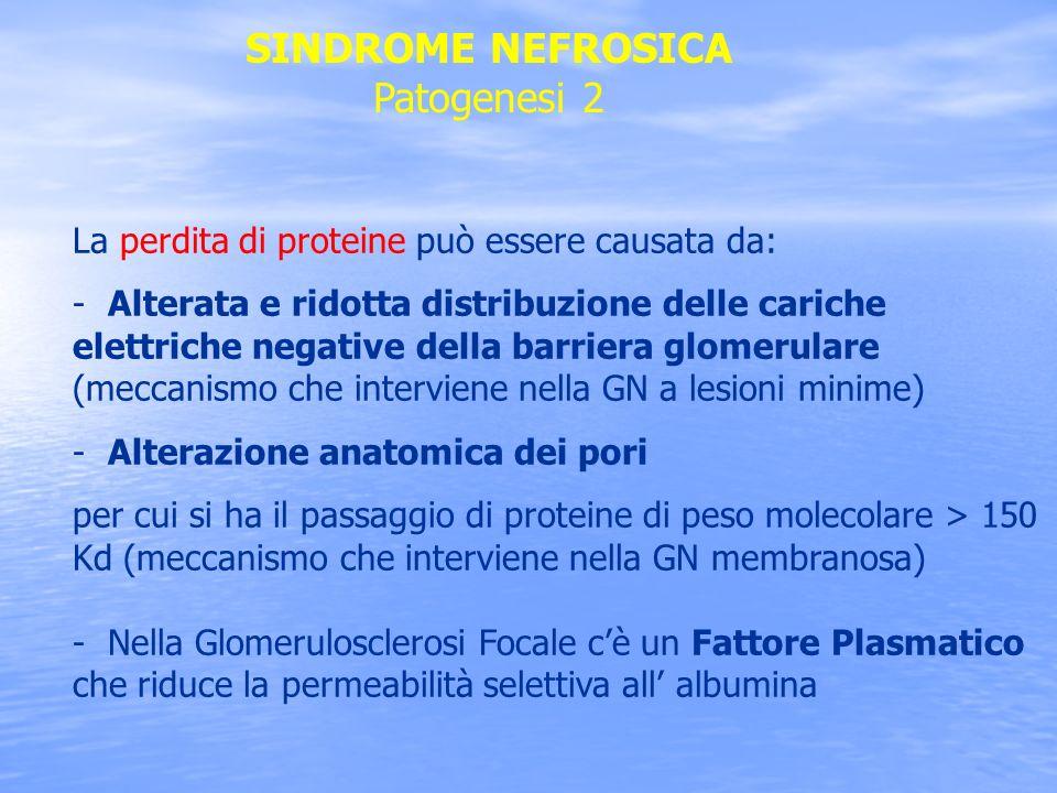SINDROME NEFROSICA Patogenesi 2