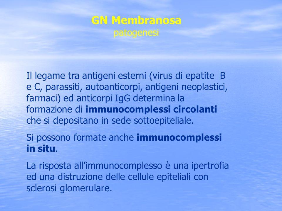 GN Membranosa patogenesi