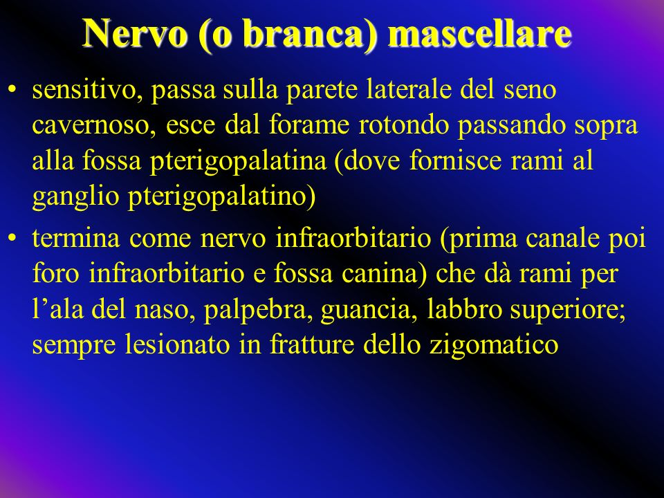 Nervo (o branca) mascellare