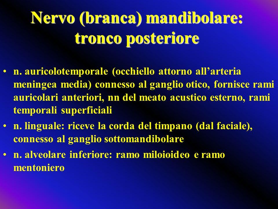 Nervo (branca) mandibolare: tronco posteriore