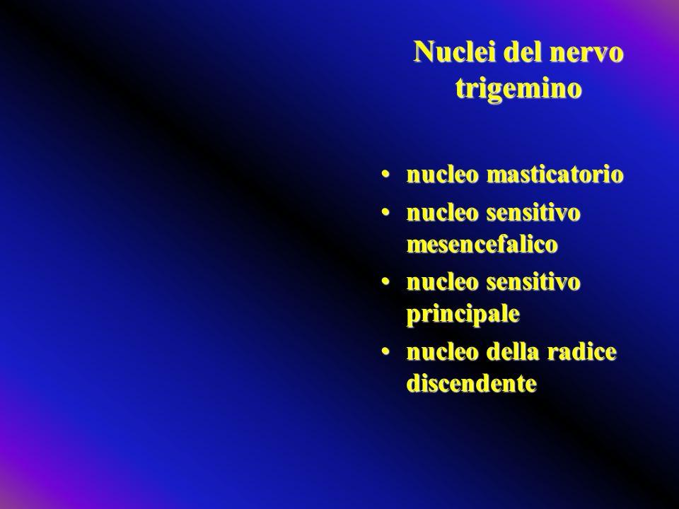 Nuclei del nervo trigemino