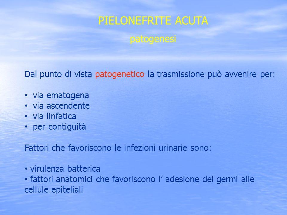 PIELONEFRITE ACUTA patogenesi