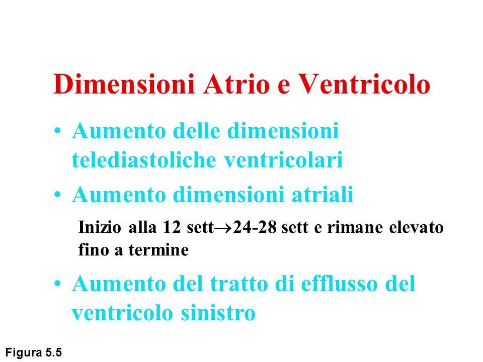 Dimensioni Atrio e Ventricolo