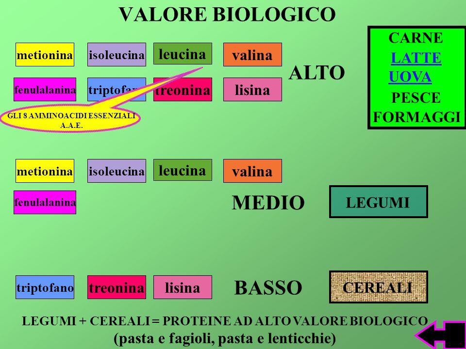 VALORE BIOLOGICO ALTO MEDIO BASSO CARNE leucina valina LATTE UOVA