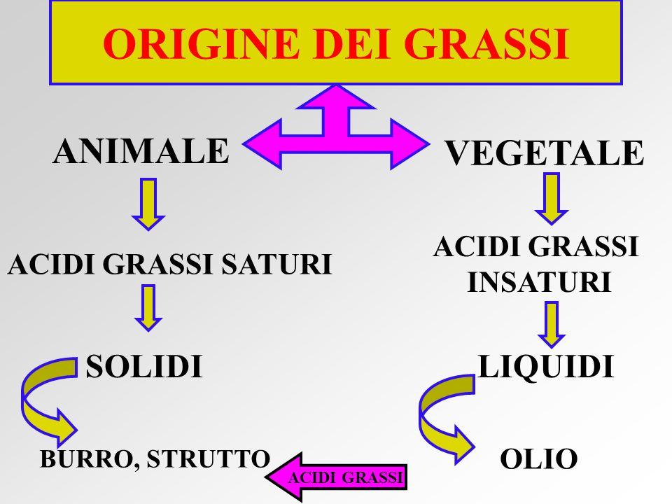 ORIGINE DEI GRASSI ANIMALE VEGETALE SOLIDI LIQUIDI ACIDI GRASSI