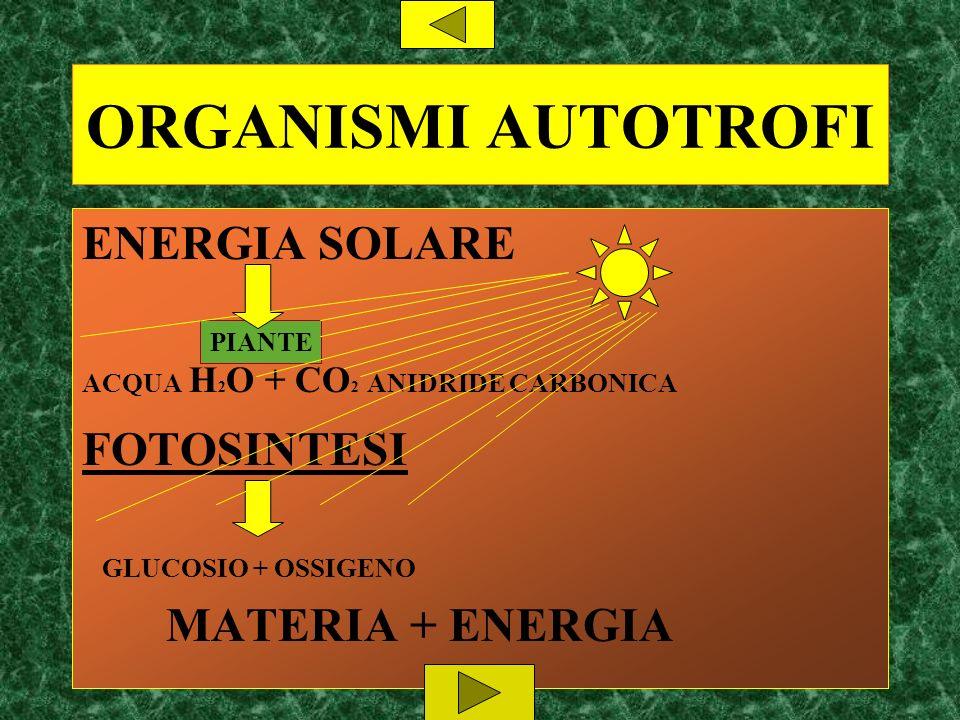 ORGANISMI AUTOTROFI ENERGIA SOLARE FOTOSINTESI MATERIA + ENERGIA