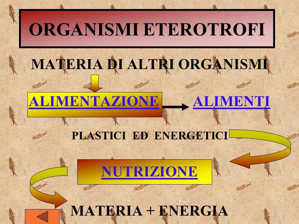 ORGANISMI ETEROTROFI MATERIA DI ALTRI ORGANISMI ALIMENTAZIONE ALIMENTI