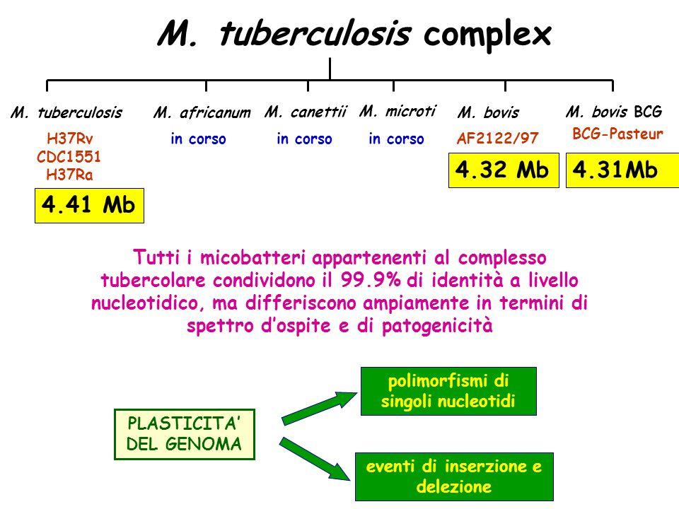 polimorfismi di singoli nucleotidi eventi di inserzione e delezione