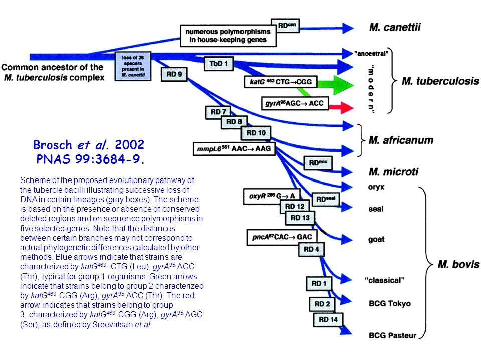 Brosch et al. 2002 PNAS 99:3684-9.
