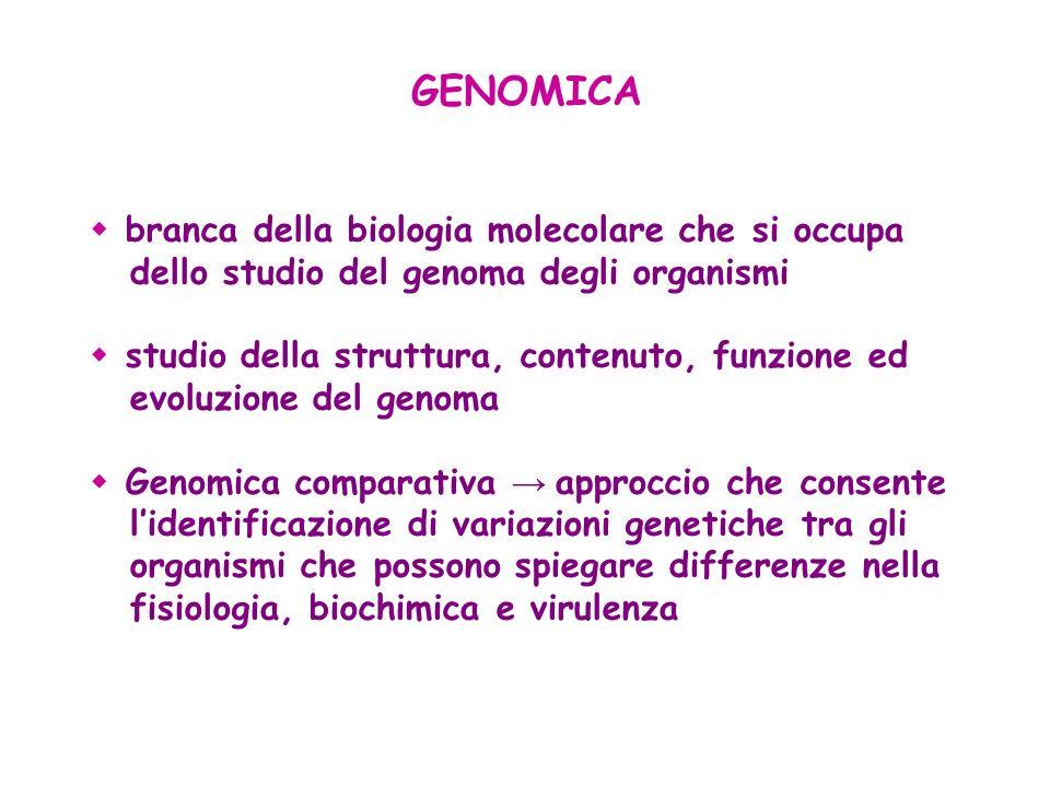 GENOMICA branca della biologia molecolare che si occupa dello studio del genoma degli organismi.