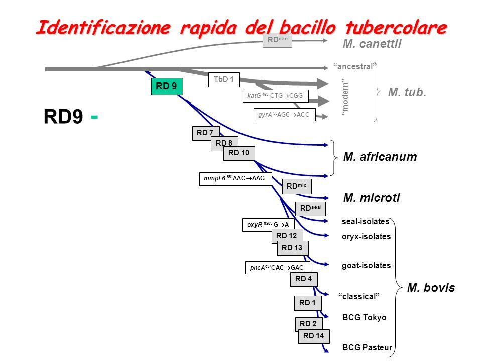 RD9 - Identificazione rapida del bacillo tubercolare M. canettii