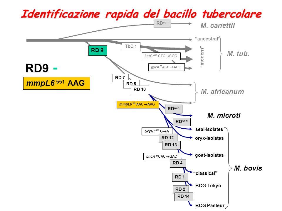 RD9 - Identificazione rapida del bacillo tubercolare mmpL6 551 AAG