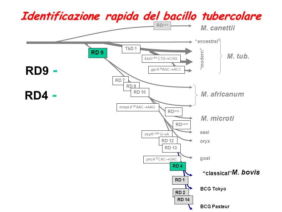 RD9 - RD4 - Identificazione rapida del bacillo tubercolare M. canettii