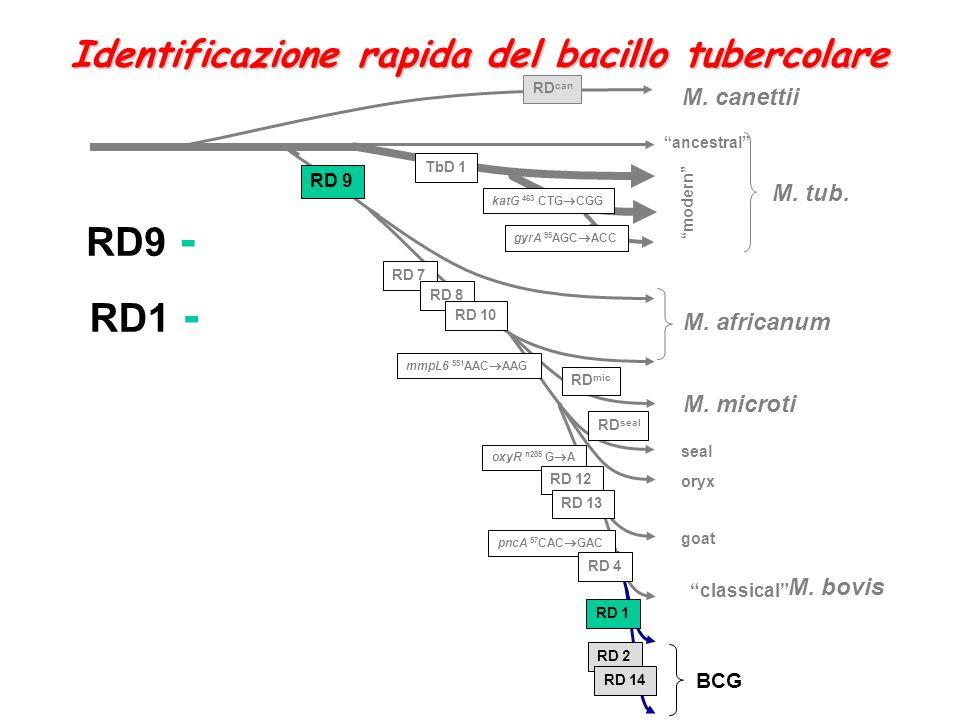 RD9 - RD1 - Identificazione rapida del bacillo tubercolare M. canettii
