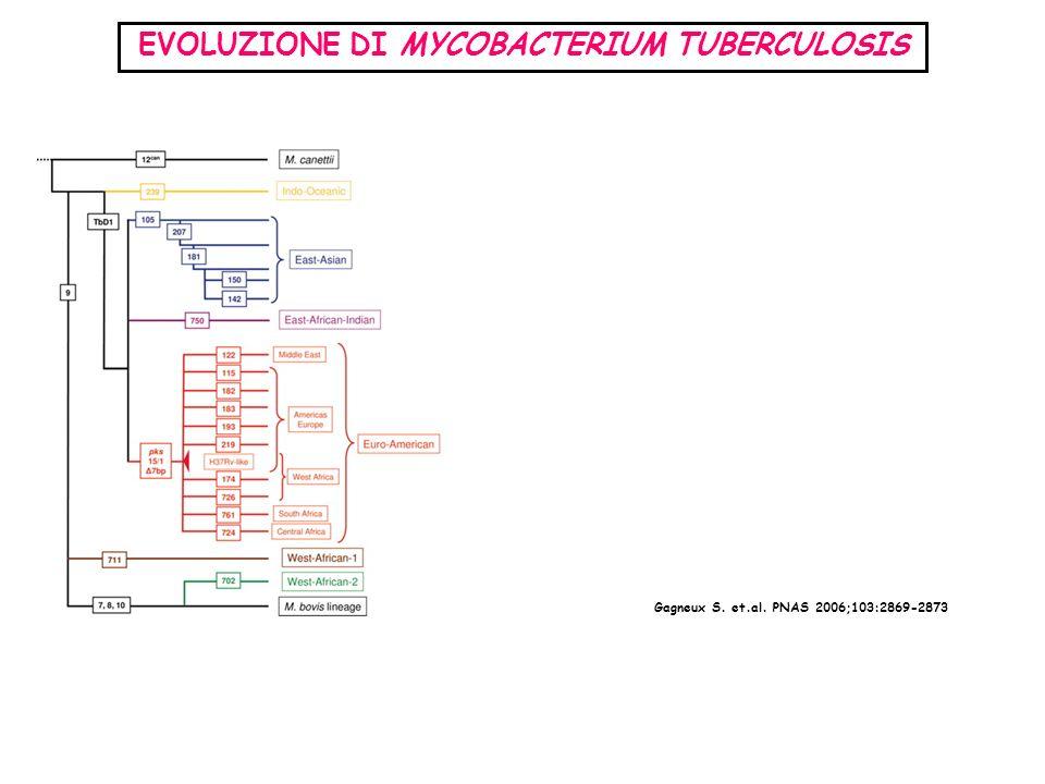 EVOLUZIONE DI MYCOBACTERIUM TUBERCULOSIS