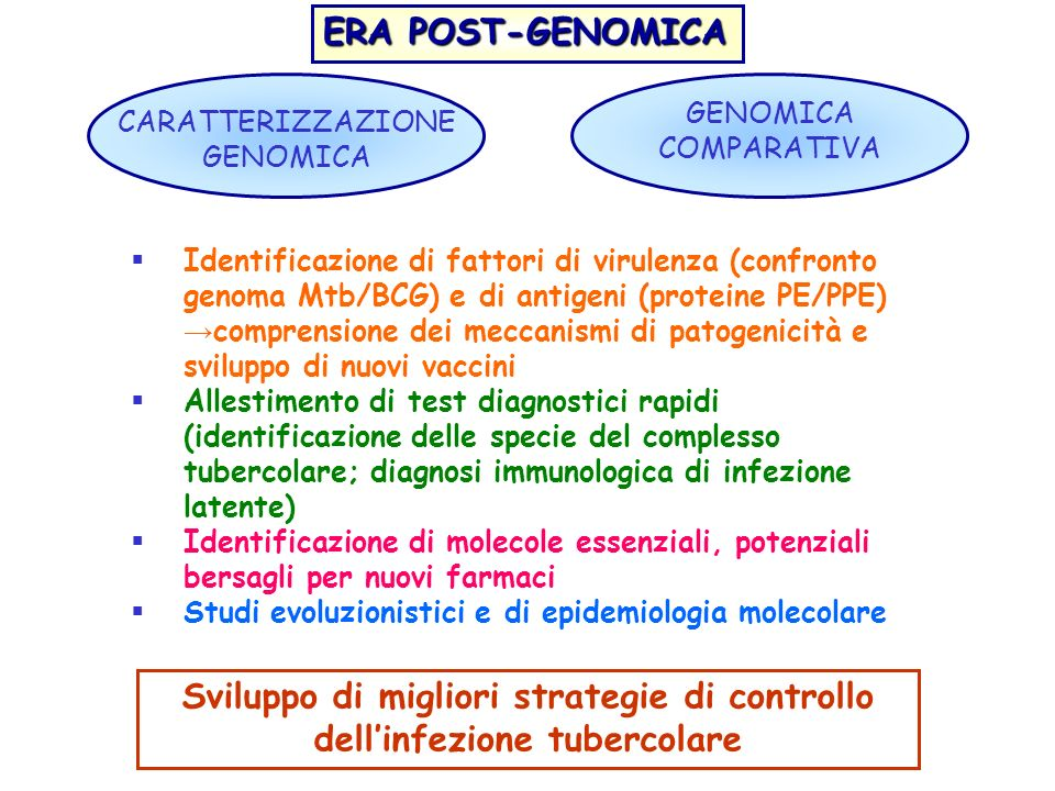 Sviluppo di migliori strategie di controllo dell'infezione tubercolare