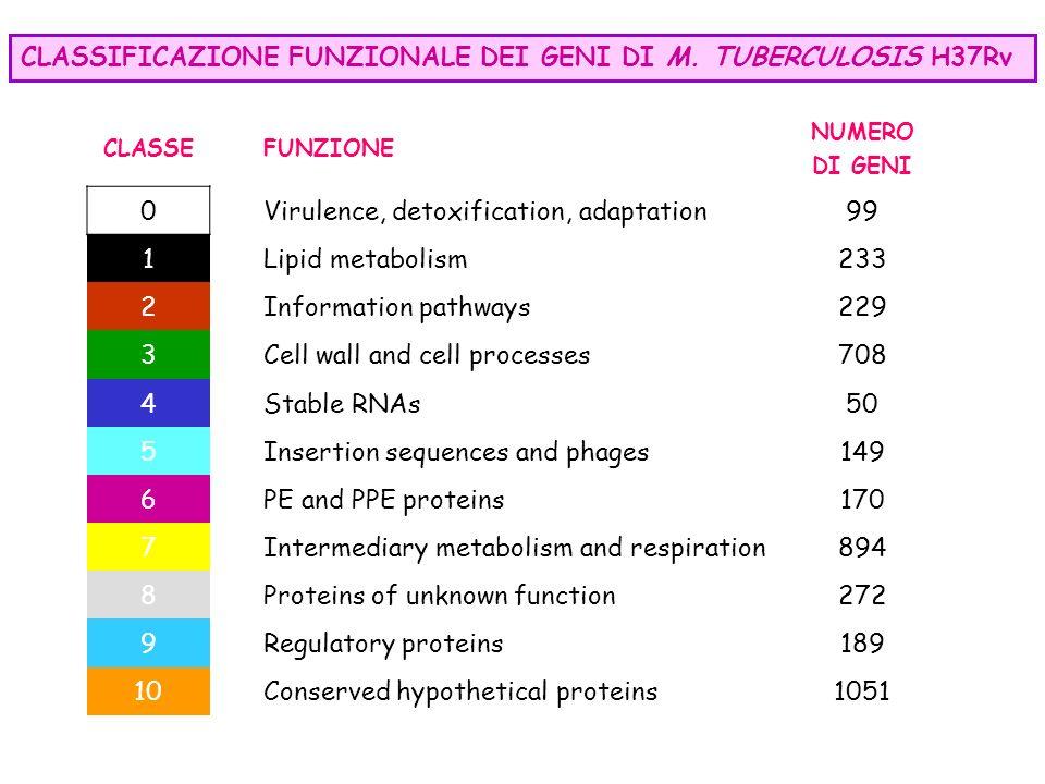 CLASSIFICAZIONE FUNZIONALE DEI GENI DI M. TUBERCULOSIS H37Rv