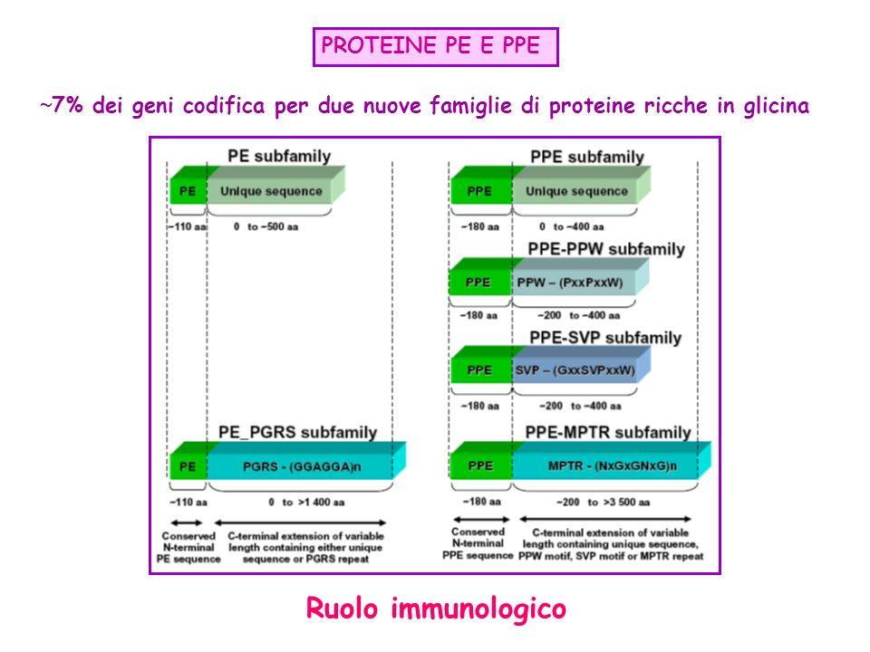 Ruolo immunologico PROTEINE PE E PPE
