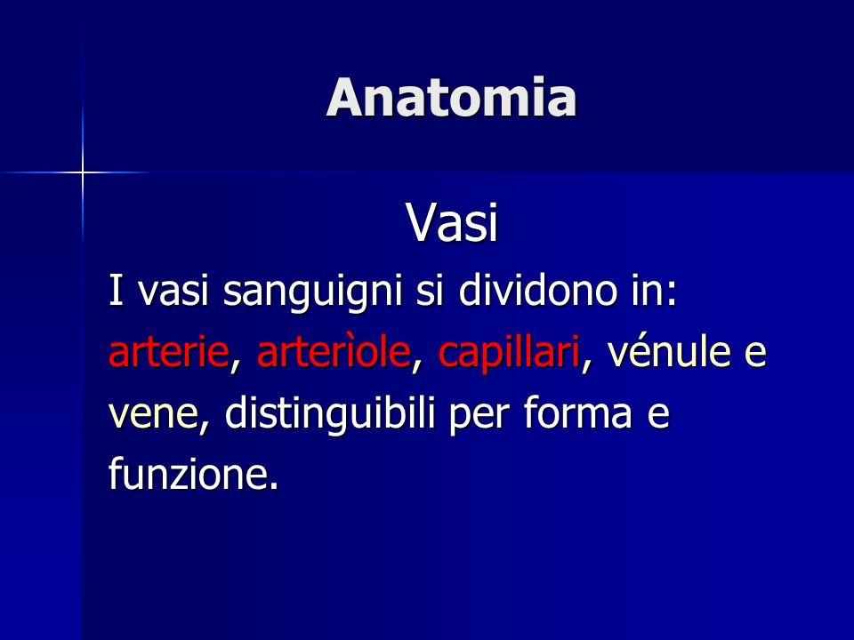 Anatomia Vasi I vasi sanguigni si dividono in: