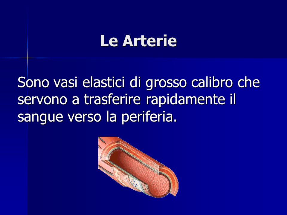 Le Arterie Sono vasi elastici di grosso calibro che servono a trasferire rapidamente il sangue verso la periferia.