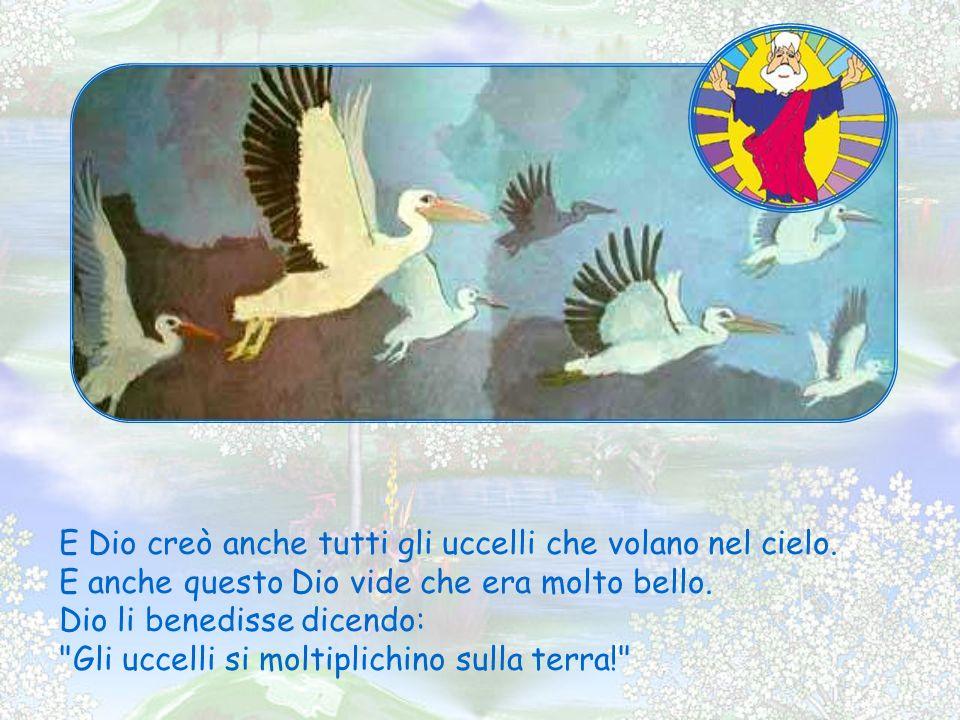 E Dio creò anche tutti gli uccelli che volano nel cielo.